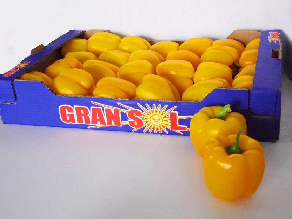 empaquetado y envasado de pimiento amarillo en Andrés Antón. Elche