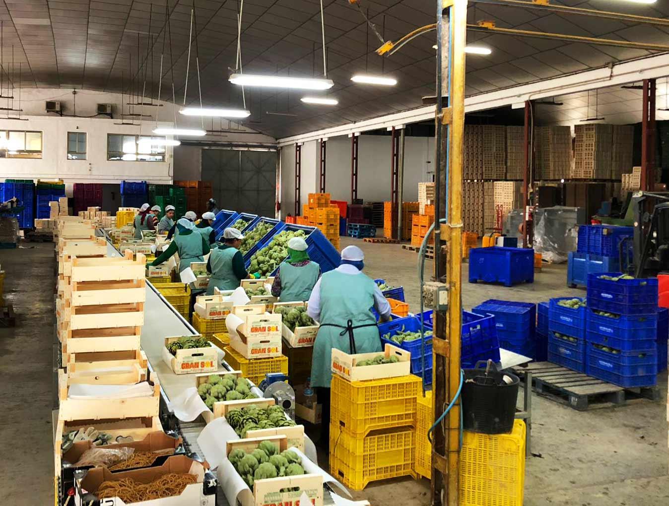 Andrés Antón. Exportación y distribución de frutas y verduras